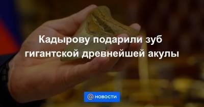 Кадырову подарили зуб гигантской древнейшей акулы