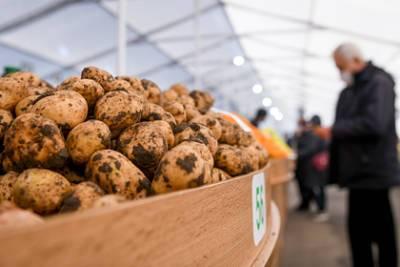 Россия пригрозила запретить ввоз картофеля из Азербайджана